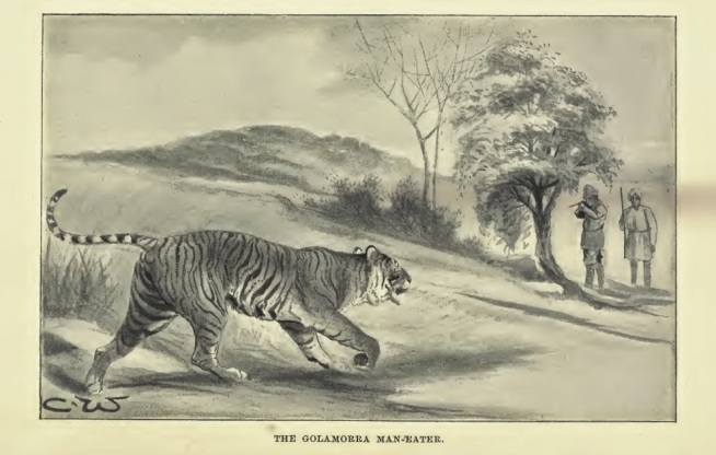 tigers of south india